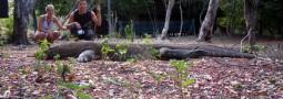 В поисках Комодских драконов
